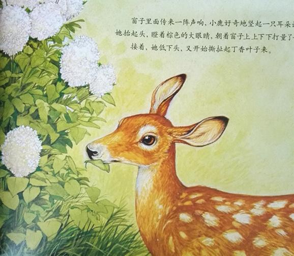 知识图画书,这些有趣的动物故事为孩子们展示了一个个神奇的动物世界