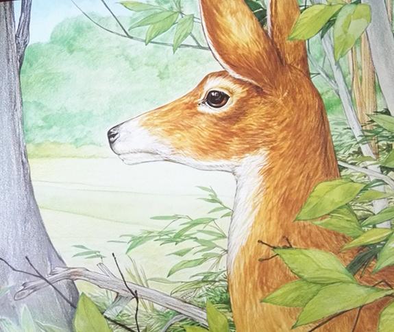 我的野生动物朋友——白尾鹿的花丛大冒险